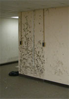 Dampness_and_Mould_Investigation_and_Restoration